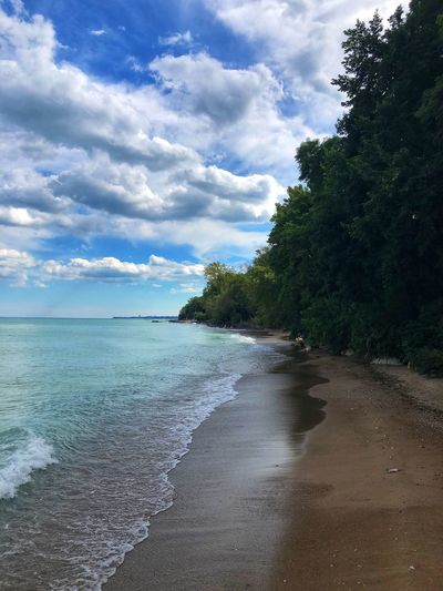 Shoreline view Sky Cloud - Sky Tree Water Beauty In Nature Beach Sea Land Plant Scenics - Nature Tranquility Tranquil Scene Nature Day Sand No People Idyllic Outdoors Non-urban Scene