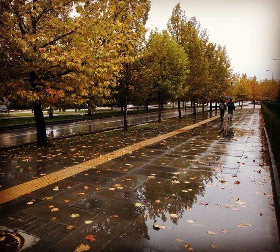 Yağmur, yağmur… Bu neyi anlatır? Bunca siste bunca ıslak serçe Hüznü bir köşesinden tutup kaldırmıştır./Gülten Akın Rainy Days Ankara Türkiye Hüzün... Road Autumn colors Natural Autumn🍁🍁🍁 Tree Water Wet Puddle Silhouette Sky RainDrop Rain