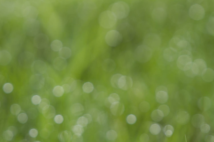 Backgrounds Beauty In Nature Close-up Day Defocused Freshness Grass Green Color Nature No People Outdoors Pattern Textured