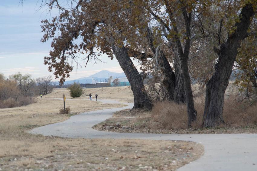 Tree Plant Nature Landscape Tranquility Tranquil Scene Pathway Walking Colorado Denver Openspace Publicspace