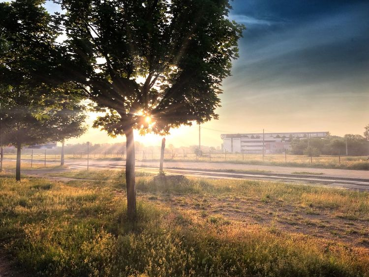 iPhone 7 Plus,BrainFeverMedia Plant Tree Sky Nature Field Sunlight Fence Landscape Outdoors No People Beauty In Nature