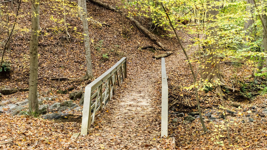 Autum Colors Autumn Autumn Leaves Hiking Autumncolors Beauty In Nature Bridge Day Leaf Nature No People Outdoors Railing Trail Tranquility Tree