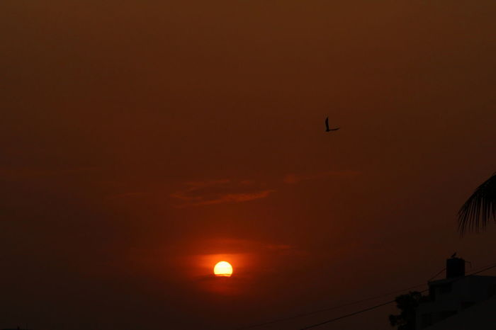 Bala_photography Beauty In Nature Bird Flying Nature No People Outdoors Sky MyClick Canon1300d Sunlight Sunset Eye4photography  Cameraview Myclicks Goldencolor Eveing Shot Lovephotography  Live For The Story Visual Feast The Great Outdoors - 2017 EyeEm Awards EyeEmNewHere