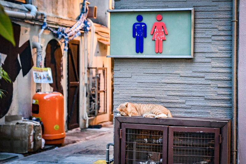 Next in queue Street Street Cat HongKong Hong Kong Next In Line Queue Womens Mens Wc Toilet Building Exterior Architecture Built Structure Vertebrate Day Animal Pets One Animal No People Mammal Domestic Domestic Animals Feline Cat Outdoors Domestic Cat Entrance