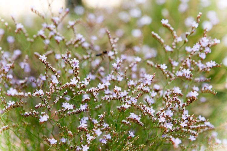 Beauty In Nature Bloom Blossom Botany Flower Fragility Freshness Nature Selective Focus