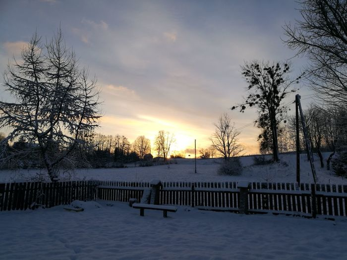 Tree Snow Winter Cold Temperature No People Sky Nature Sunrise Morning