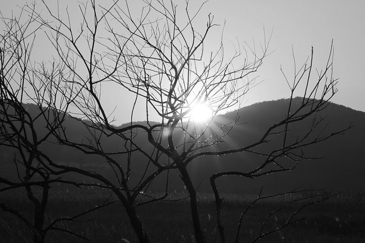Eyeem Monochrome Photo Natureart Canon EyeEm Gallery Feeling Thankful Great Atmosphere Feelings View Photooftheday Creative Light And Shadow EyeEm Best Shots - Nature Nature Taking Photos (null)Sunshine Beautiful Nature Photography Nature Harmony Monochrome Canon 7D , 50mm