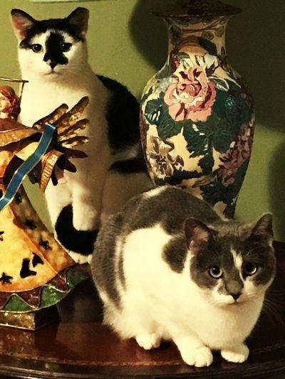 Domestic Cat Animal Themes Domestic Animals One Animal Mammal Whisker Sitting