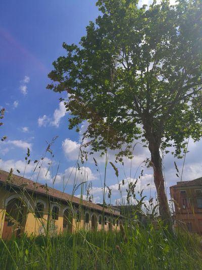 Forgotten Friendactivites Holiday Treviso People Peace Tree Sky Architecture Building Exterior Built Structure Cloud - Sky Grass Growing Residential Structure Fence Human Settlement Blooming Flower Head
