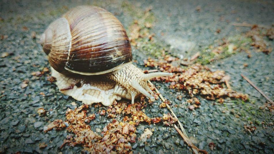 Snail Animals Little World Little Creatures Makro Taking Photos Enjoying Life Z1compact Macro Macro Beauty Minimalism