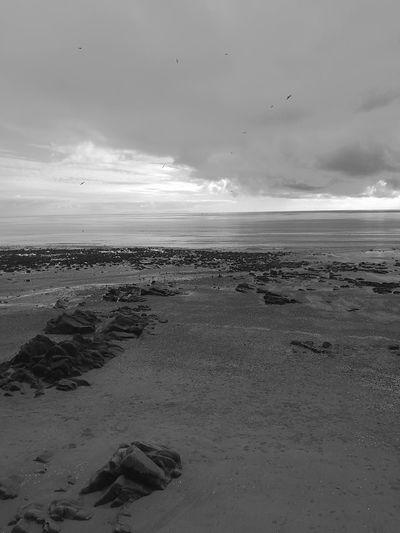Beach Sea Bird Nature Sky Sand Landscape