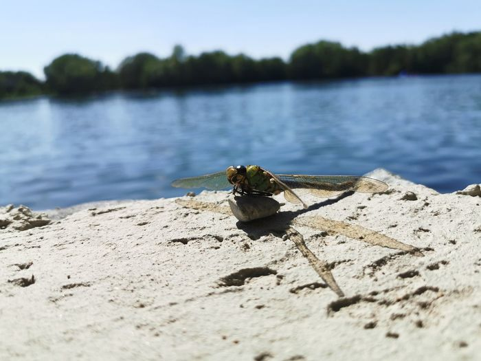 Close-up of insect on a lake