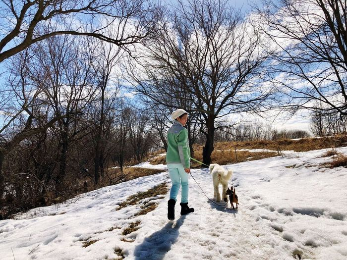 Dog Lover Walking Dogs Full Length Dog Pets Walking Cold Temperature Snow Winter One Person Lifestyles Nature