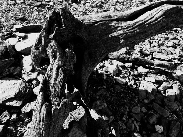Darkness And Light Monochrome Landscape Textures And Surfaces
