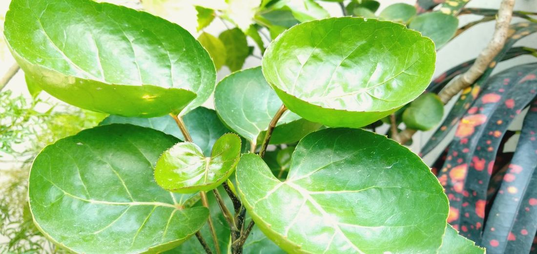 High angle view of fresh green leaves in water