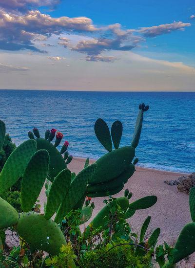 Cactus growing on beach against sky