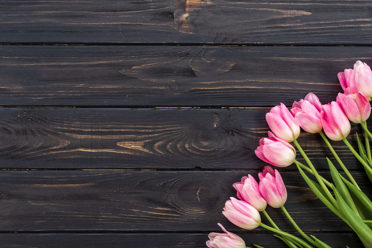 Close-up of pink tulips on wooden table
