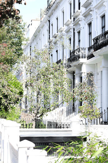 Building Exterior Architecture Built Structure Building Tree Plant Day Nature No People Outdoors Sunlight White Color Growth Window Residential District City Balcony Flower Railing Flowering Plant Apartment Brexit White Green Color Autumn