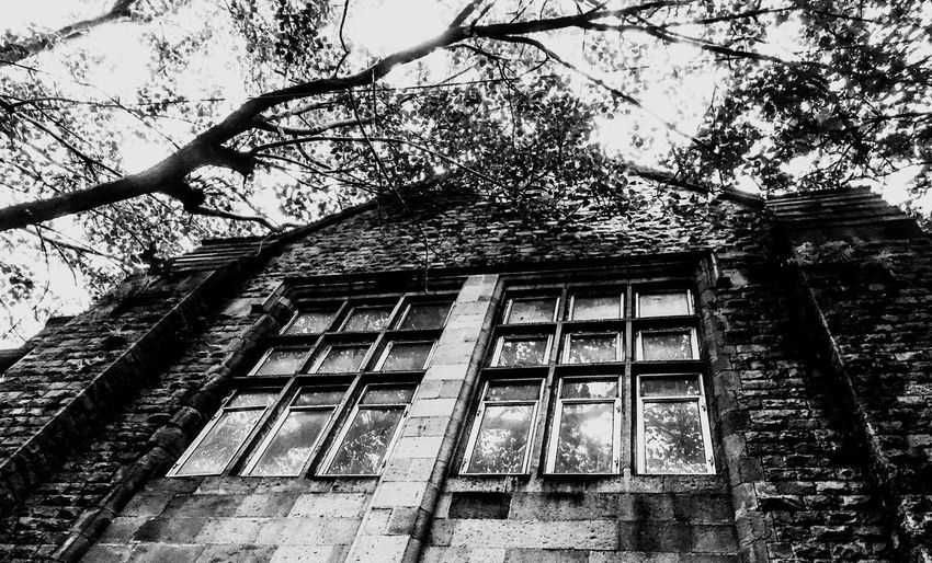 Mumbai University Mumbai Architecture Low Angle View Tree Built Structure Building Exterior Branch Outdoors No People Day Sky