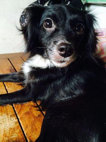 ❤️❤️❤️ Dog Dog Love Cute Pets