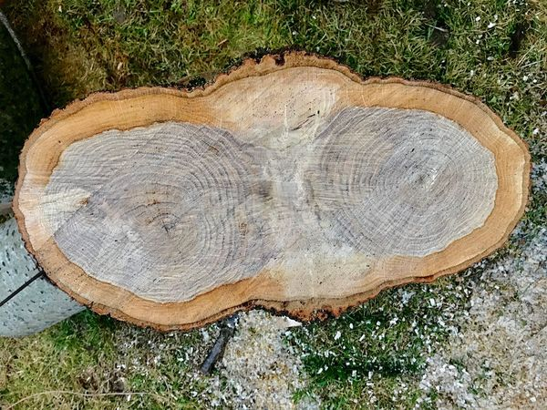 Tree Ring Wood - Material Log Tree Stump Timber Tree Nature Lumber Industry Cross Section Close-up Tree Trunk Wood Grain Deforestation Environmental Issues Outdoors No People Industry Day