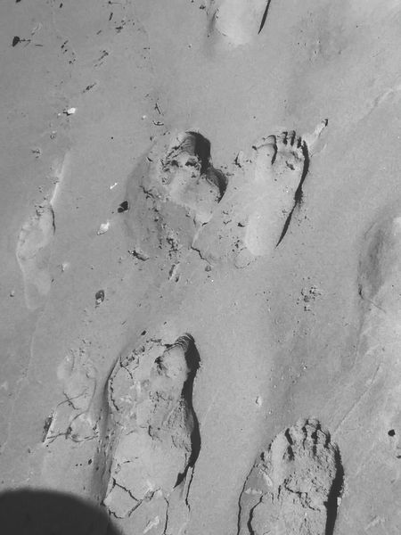 footsteps Sand Paw Print Track - Imprint FootPrint Backgrounds Close-up Textured  Shore Sandy Beach Beach