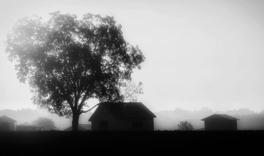 Fog Morning Outdoors Farmhouse Beauty In Nature Nature Tree Blackandwhite Sky Walking Around Shapes Silhouette Relaxing Rural Scene Farm Quiet Moments Tranquil Scene Autumn Solitude Taking Photos Scenics Field Jessicaselects