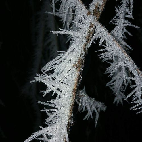 Snowflake Snow Abstract Winter Black Background No People Illuminated Tree Ice Crystal Cold Temperature Nature Indoors  Night Close-up