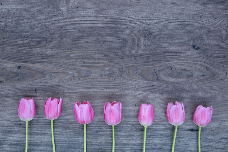 Background Close-up Flower Flower Head Fragility Freshness Grey In A Row LINE Love No People Pink Plant Tulip Tulips Wallpaper Wood EyeEmNewHere