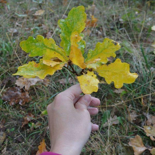 Autumn in my hand 💚 Holding Autumn Leaf Nature Yellow Beauty In Nature Leisure Activity Season  Freshness Fragility Autumn🍁🍁🍁 Autumcolours