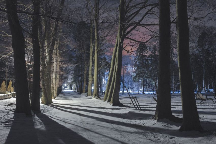 Snow Night Japan Tree Tree Trunk Nature Forest Beauty In Nature Shadow Tranquility Winter Landscape No People