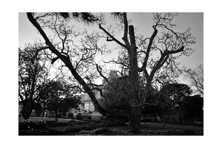 Bnw_friday_eyeemchallenge Sundown @ Meeks Mansion 2 Cherryland, Ca. National Register Of Historic Places 1972 Built By William Meek 1869 23-27 Rooms Architecture : Victorian Italian Villa Architectural Style: Second Empire Grounds Include Carriage House & Gazebo Agricultural Farmlamd Of Orchards Originally 3000 Acres Crops: Cherry,apricots,plums & Almonds HARD: Hayway Area Recreation Park District Now Owns & Operates For Public Use Weddings,tours,museum,workshops,garden Black & White Black And White Black And White Collection  Black And White Photography