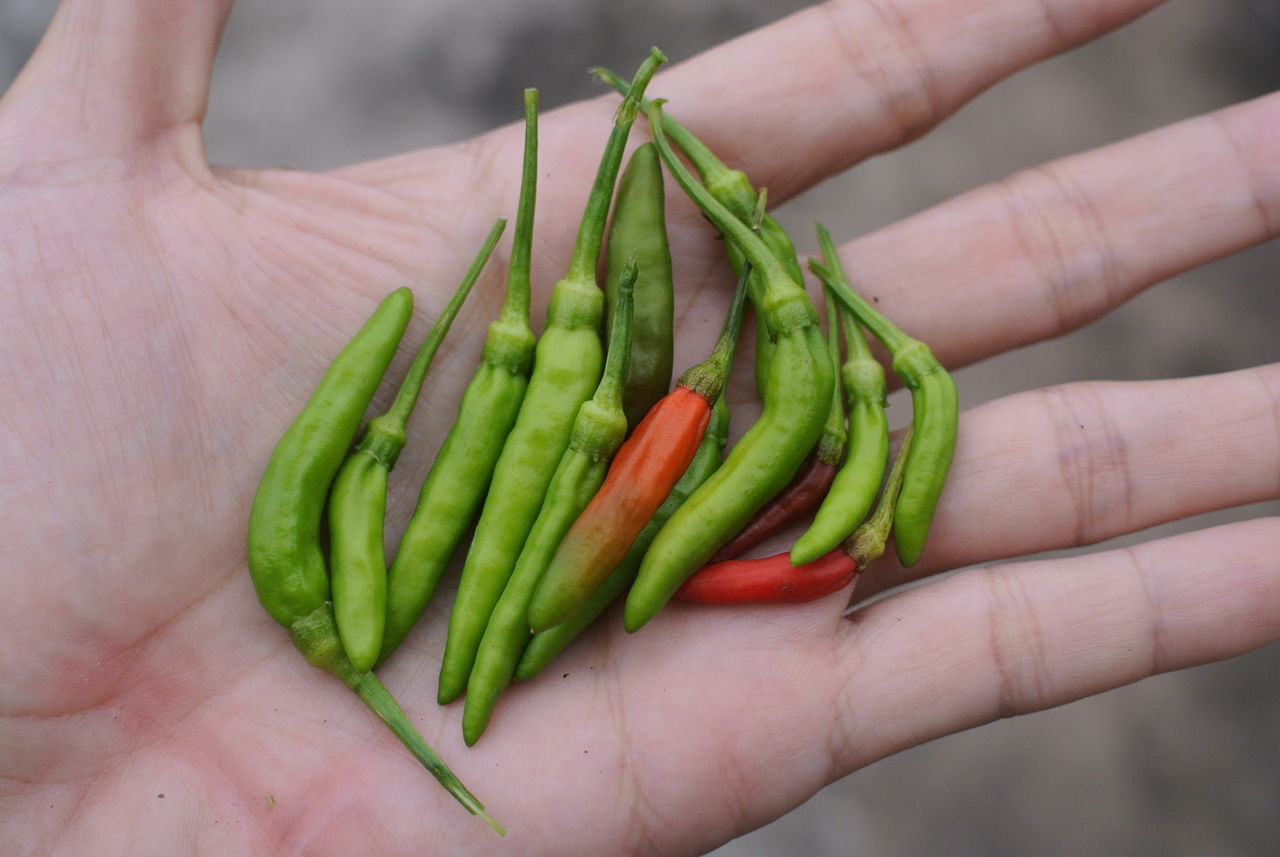 Cropped Hand With Green Chili Peppers