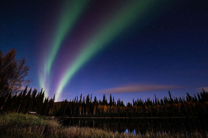 Alaska Astronomy Aurora Borealis Aurora Polaris Beauty In Nature Chena Hot Springs Resort Constellation Fairbanks Green Color Lake Landscape Nature Night No People Northern Lights Outdoors Sky Space And Astronomy Star - Space