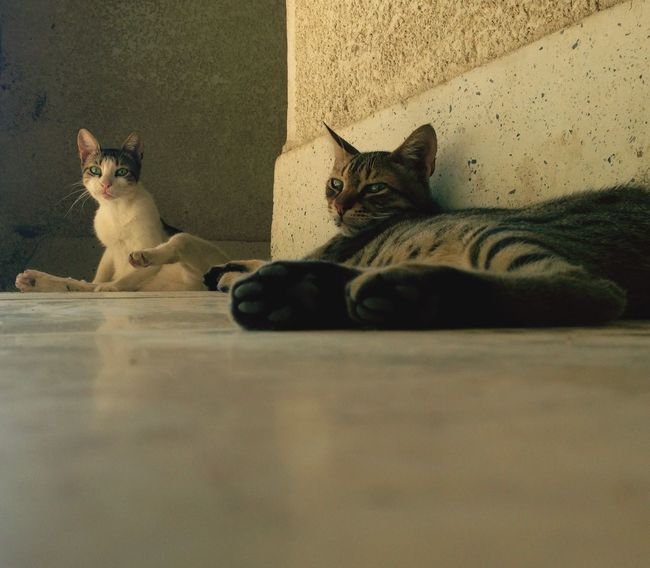 😺😻 Hanging Out Taking Photos Enjoying Life Check This Out Hello World Cheese! That's Me Hi! Relaxing Animal Animals Pets EyeEm Egypt Ismailia Natural Picoftheday Life Cairo