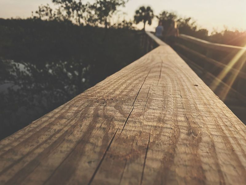 Wood - Material Outdoors Nature Focus On Foreground Diminishing Perspective Surface Level The Way Forward Day No People Wood Paneling Close-up Tree Footbridge Sky