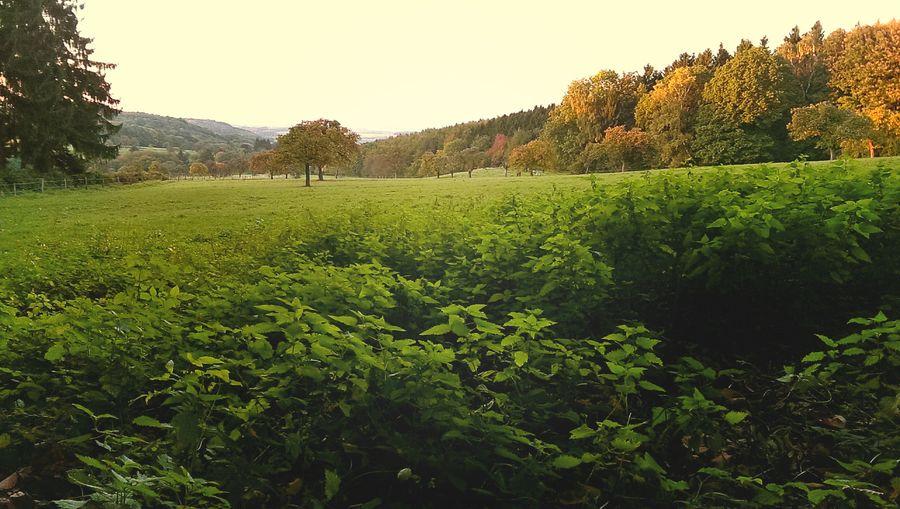 Siebengebirge Autumn Colors Germany Enjoying Life