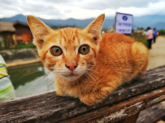 adorable cat on