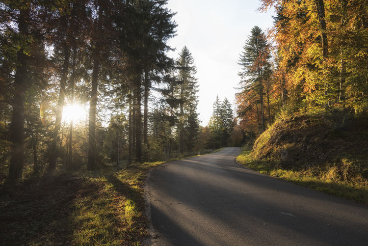 Soleil d'automne Autumn Autumn Colors Beauty In Nature Day Fall Forest Landscape Nature No People Orange Color Outdoors Road Scenics Sunlight The Way Forward Tranquil Scene Tranquility Tree Lost In The Landscape
