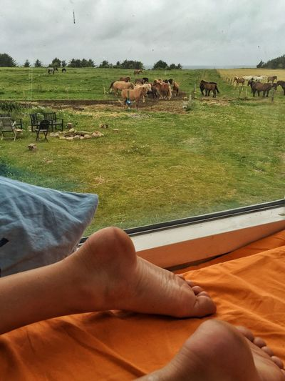 A Room With A View Horses Holiday POV Nature On Your Doorstep Good Morning Coastline Hello World Denmark Barefoot From My Point Of View