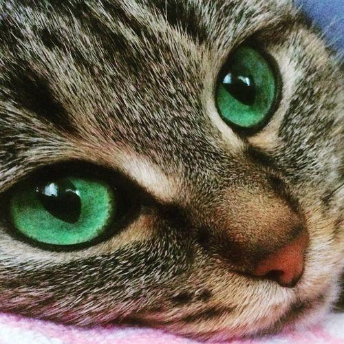 Cat Eyes One