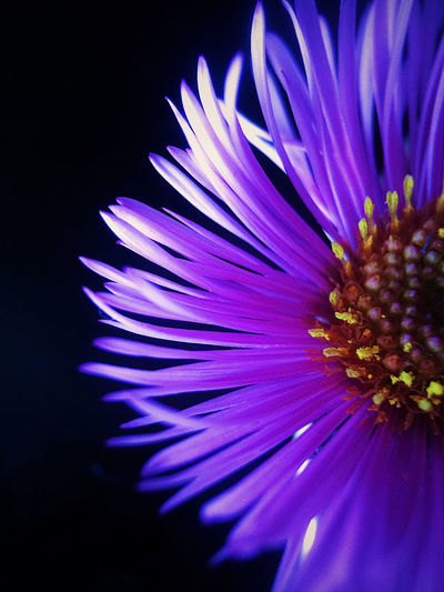 💜💜 Flower