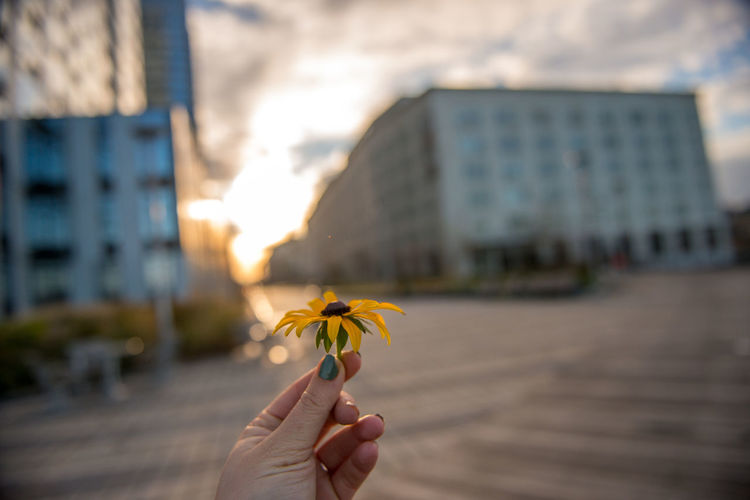 Close-up of hand holding flower in city