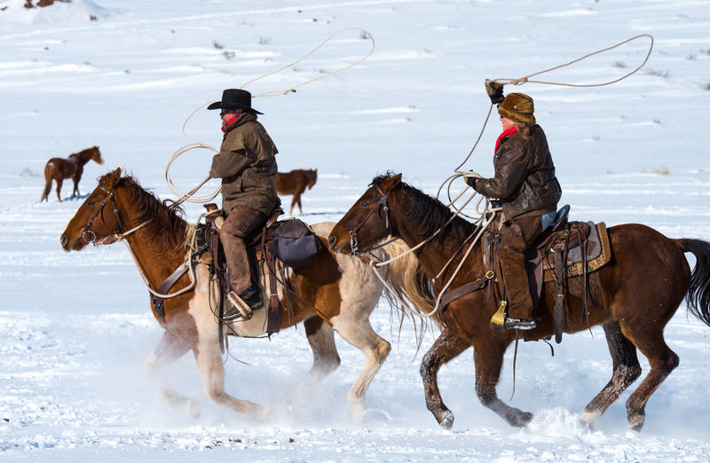 Feb 2019 - Music Meadows Ranch Colorado Lasso Winter Cowgirl Cowboy Cowboy Hat Ranch Life Horse Themes Domestic Animals Snow Mammal Cold Temperature Animal Group Of Animals Activity Livestock Animal Themes Riding Motion Outdoors Working Animal Horse Land Domestic Ranch Work