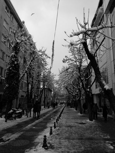 Tree Outdoors City Day Sky Nature Snow ❄ Winter Turkey Yalovasahili