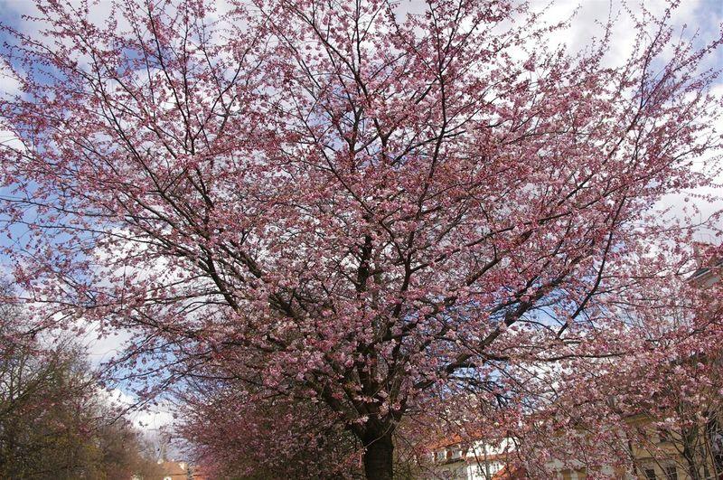 Enjoying The Sun Pink Flower Realpictures Naturelovers Beautiful