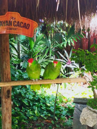 Two Is Better Than One Costa Maya ♡ Green Color Close-up Non-urban Scene
