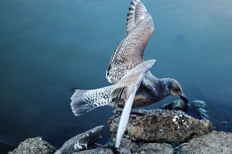 Close-Up Of Bird Flying Over Rocks By Sea