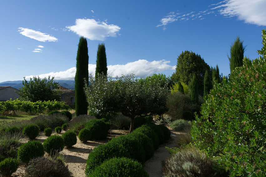 garden near Roussillon France Provence Beauty In Nature Cloud - Sky Day Garden Green Color Growth Landscape Nature No People Outdoors Plant Roussillon Scenics Scrubs Sky Tranquil Scene Tranquility Tree