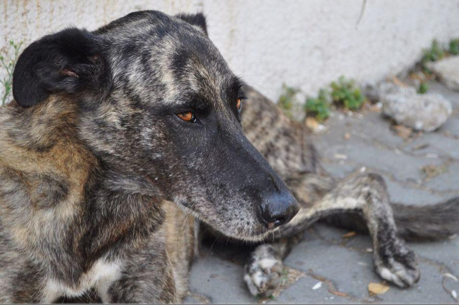Dünyadaki her insandan daha masum One Animal Dog Looking Away No People Innocent Face Animal Themes Dog Love Animal Head  Animal Nose Dogslife